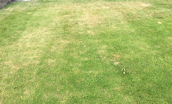 Stress on Lawn
