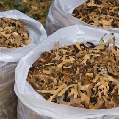 bagged leaves