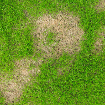 5 Telltale Signs That You Have Grubs In Your Lawn